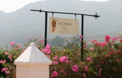 Ayama Wine estate 250x160