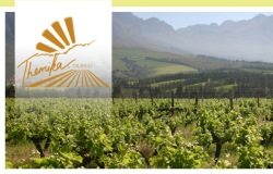 Tulbagh Winery 250x160